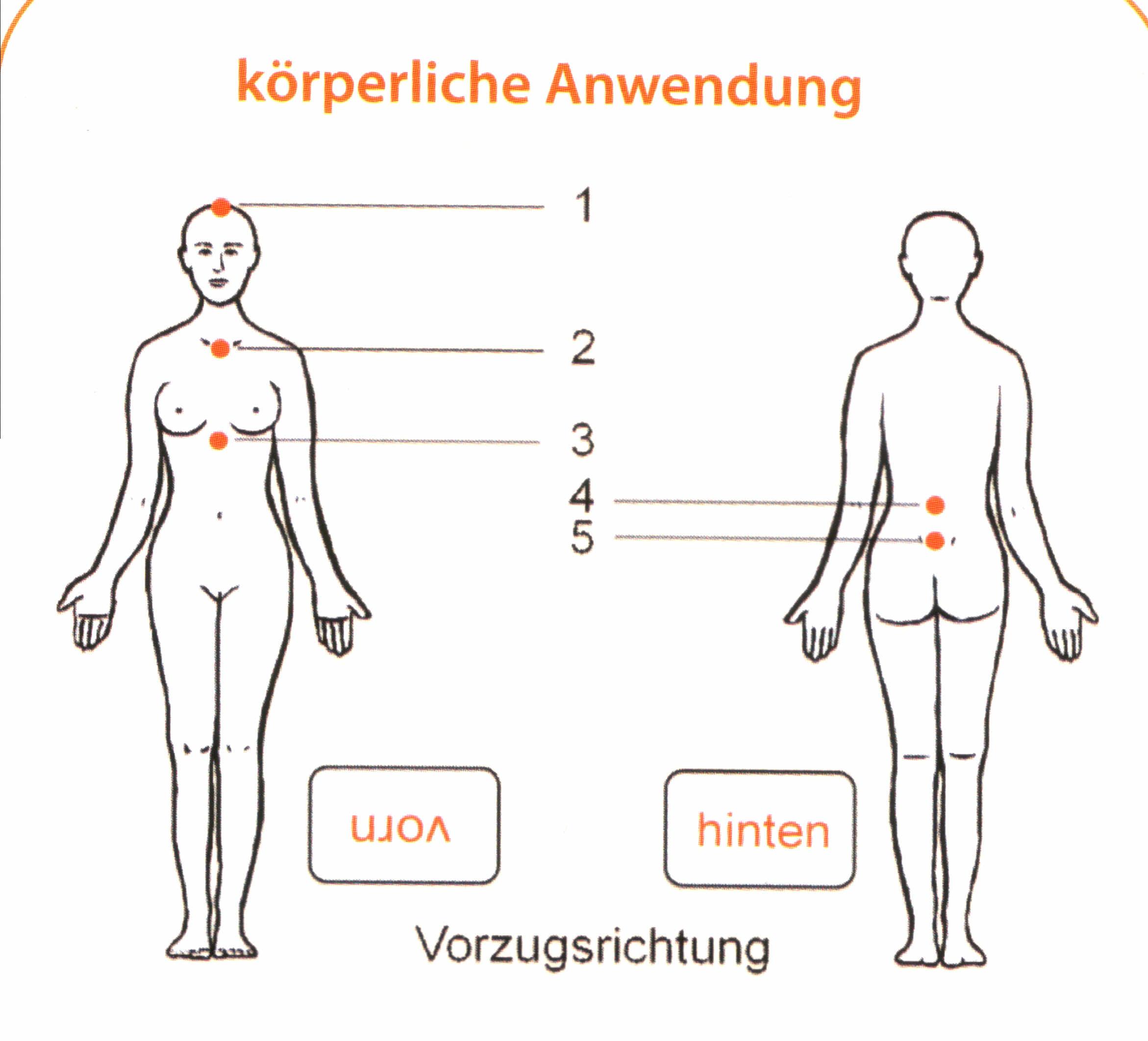 Fantastisch Lage Der Thymusdrüse Galerie - Menschliche Anatomie ...